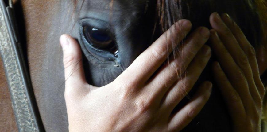 Mains de l'ostéopathe sur la tête d'un cheval